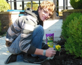 Jacob Kier glances up while planting in the Harbor