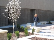 Landscape Architect 1974 WHS grad, Teri Farha inspects the newly completed Harbor